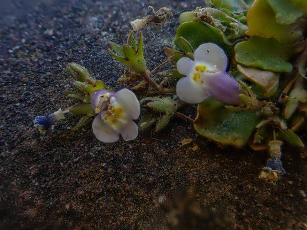 bloempjes